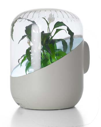 Andrea Plant-Powered Air Purifier 2018